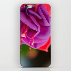 Dark Eyes Fuschia iPhone & iPod Skin