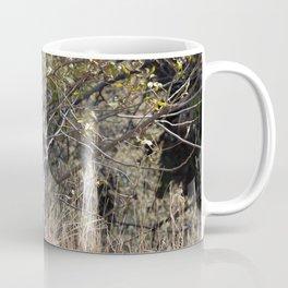 Young deer in Tonto Natural Bridge State Park Coffee Mug