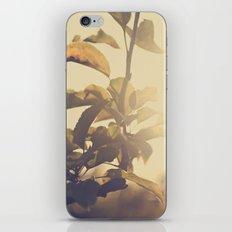 Fall Sun iPhone & iPod Skin