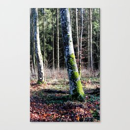 Forest in Germany 2 Canvas Print