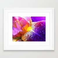 iris Framed Art Prints featuring Iris by Robin Curtiss