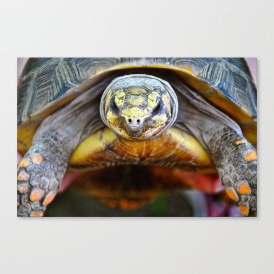 The Timid Tortoise  Canvas Print