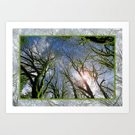 RAIN FOREST MAPLES REACHING FOR THE SKY Art Print
