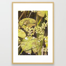 frogger... Framed Art Print
