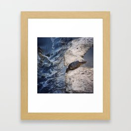 Snapping Turtle Framed Art Print