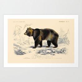 Vintage Grizzly Bear Art Print
