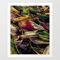 Dried Flower Petals Art Print