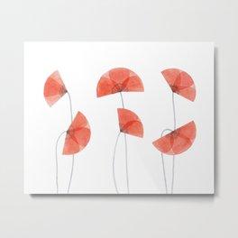 Flanders poppy, corn poppy, flower Metal Print