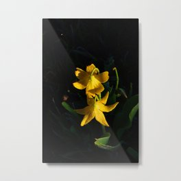 Glacier National Park, Glacier Lilies, Botanical Photography, Floral Print, Yellow Flowers Metal Print