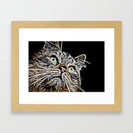 Cat Stare Framed Art Print
