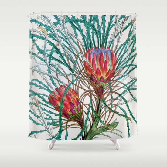 A Protea flower Shower Curtain