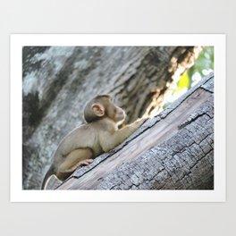 Baby Monkey - Borneo, Malaysia Art Print