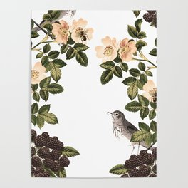 Blackberry Spring Garden - Birds and Bees Cream Flowers Poster