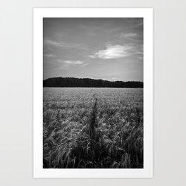 Field Track Art Print