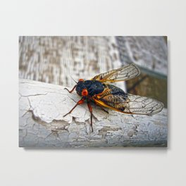 Red Eyed Cicada Metal Print