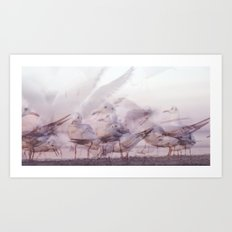 SONGS OF BIRDS   White Seagulls Art Print