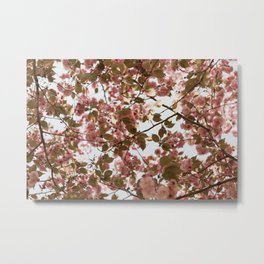 Cherry Blossoms Bloom in Brooklyn Metal Print