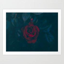 Rose In Darkness Art Print
