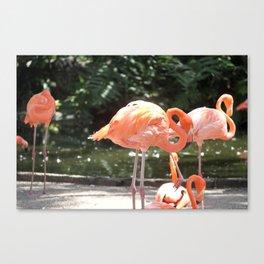Florida Flamingos Canvas Print