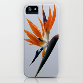 The bird of paradise flower iPhone Case