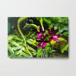 dark purple orchids Metal Print