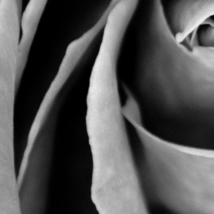 Black and White Rose  Leggings