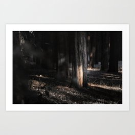 Distracted by light Art Print