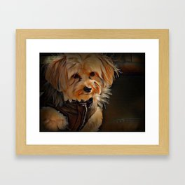 Copper the Havapookie Framed Art Print