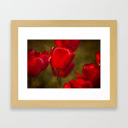 Springing Up Tulips Framed Art Print