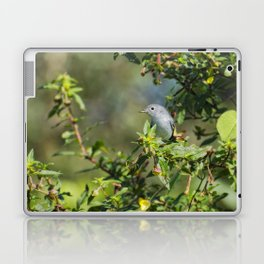 Blue-gray Gnatcatcher Laptop & iPad Skin