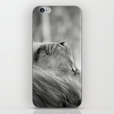 Lion Portrait iPhone & iPod Skin