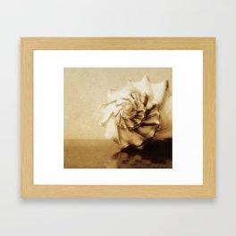 Conchology Framed Art Print