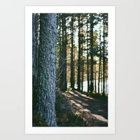 Sunlit Path - Nydoa Photography Art Print