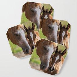 Horse Family Coaster