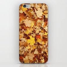 Fall Leaves iPhone & iPod Skin