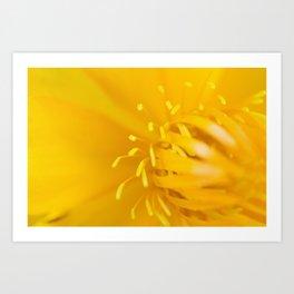 Yellow Globeflower - Golden Queen Trollius x Cultorum 3 Art Print