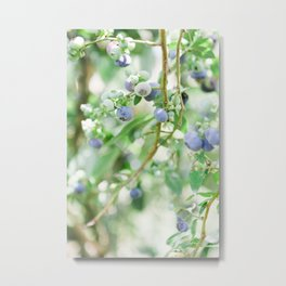 Blueberry Days Metal Print
