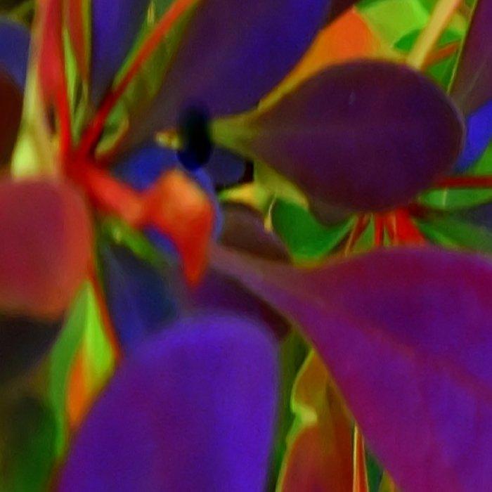 Flower | Flowers | Colour My World Leggings