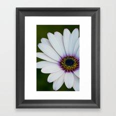 Blue Eyed Daisy Framed Art Print