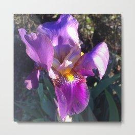 Iris in spring Metal Print