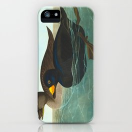 Scoter Duck Vintage Scientific Bird & Botanical Illustration iPhone Case