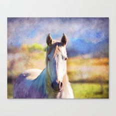 Colorful Horse Canvas Print