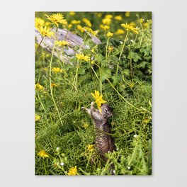 Spring Snack Canvas Print