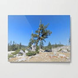 road trip, non typical tree, forked tree, back growth Metal Print