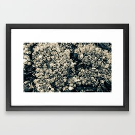 Barnacles Framed Art Print