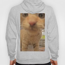 Curious Kitty Hoody