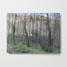 Beauty of Trees Metal Print