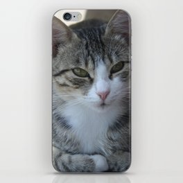 Cute Tabby Cat - Sitting On The Fence iPhone Skin