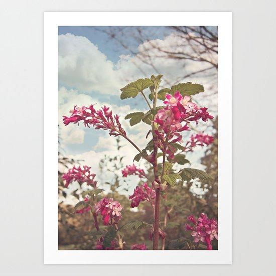 Red Flowering Currant Art Print