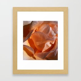 Peach Petals Framed Art Print